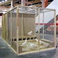 Because Of, 2009, installation (hens, eggs, various materials), 200 × 200 × 410 cm